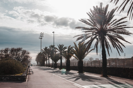 Walking the empty paved path with benches and palm trees on the sides