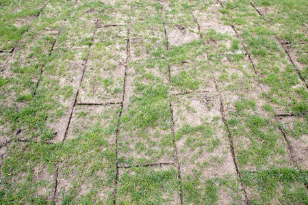 Unfolded land rolls with green grass, grass is very bad quality,  scarce and small