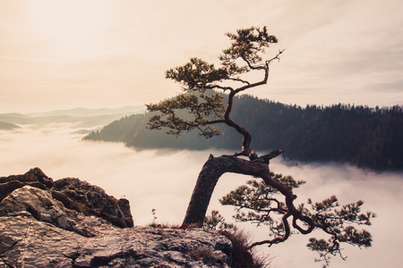 Fantastic mountain landscape, mountains are covered with trees, at the bottom of the valley filled with fog, on the foreground the tree grows from the rock