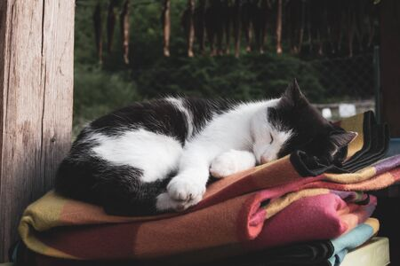 Black and white cat sleeping outdoors on colorful blankets, the concept of home warmth and coziness Banco de Imagens