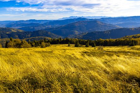 Bright yellow tall grass against the background of autumn mountains and a blue sky, Ukraine Carpathian travel concept Stock Photo