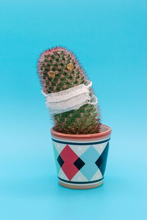Cactus in a medical mask, the concept of universal mandatory wearing of masks Stock fotó