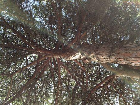 Siesta under a tree