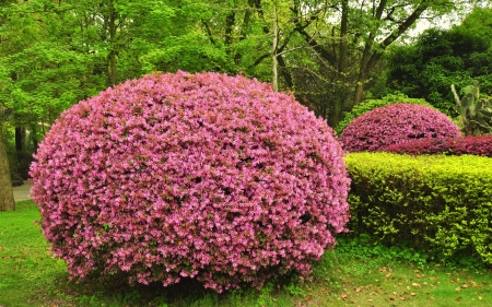 fuchsias: Fuchsias in Profusion - Guilin, China