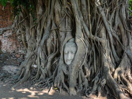 cabeza de buda: Arenisca Buddha Head enredado en las raíces del árbol de Bodhi Ayutthaya Tailandia