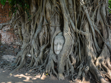 Sandstone Buddha Head Enmeshed In Bodhi Tree Roots  Ayutthaya Thailand