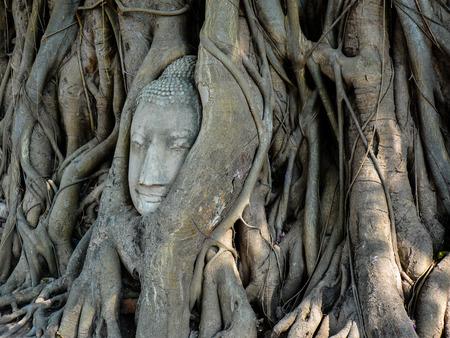 cabeza de buda: Arenisca Buddha Head enredado en las ra�ces del �rbol de Bodhi Ayutthaya Tailandia