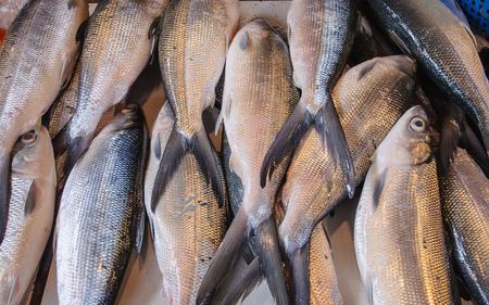 Fresh Milkfish (Bangus), National fish of the Philippines