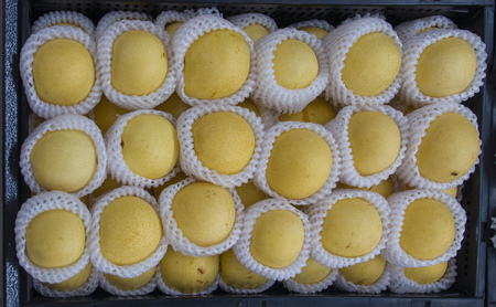 Asian Pears In Protective Wrappings