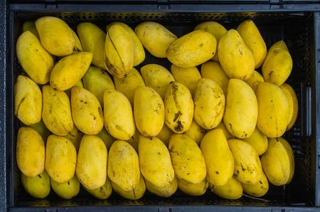ripe: Philippine Ripe Mangoes