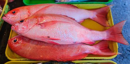 Fresh Maya-Maya - Philippine Red Snapper Stock Photo