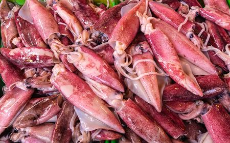 Fresh Squid, Philippine Fish Market