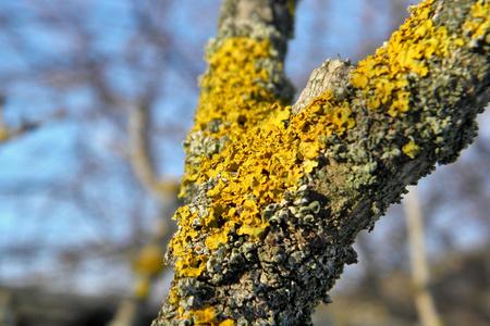 Lichen on a tree Stok Fotoğraf
