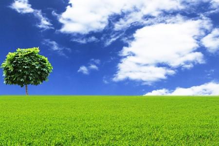 Green tree in a field on blue sky Stock Photo