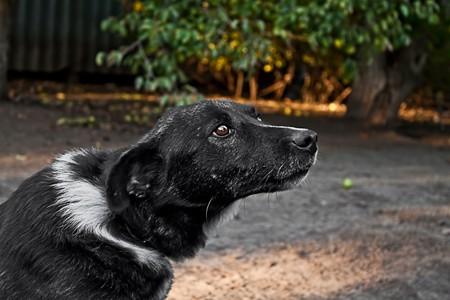 Dog on the nature background