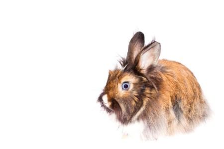 Happy Rabbit - symbol of the new year 2011