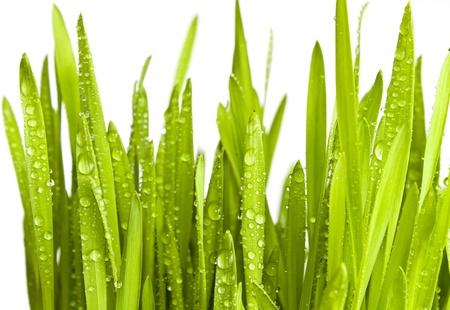 grünen Gras mit Wasser Tropfen isoliert auf weiss