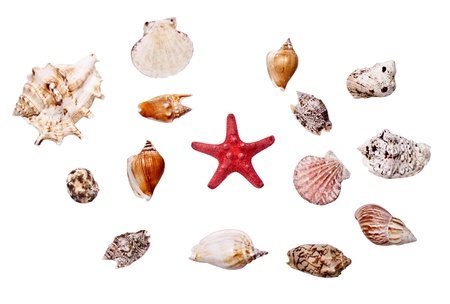 Collection of cockleshell on the white background Stock Photo