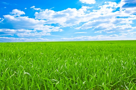 lawn: Beautiful field with a green grass and the beautiful sky on horizon with fluffy clouds