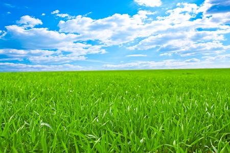 Hermoso campo con hierba verde y el hermoso cielo en el horizonte con nubes mullidas