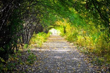 Walkway with trees Standard-Bild