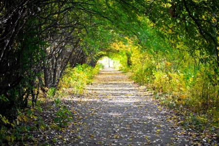 Walkway with trees photo