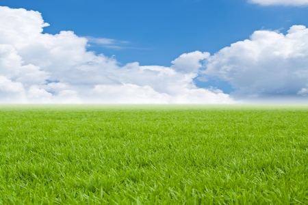 Beautiful field with a green grass and the beautiful sky on horizon with fluffy clouds photo