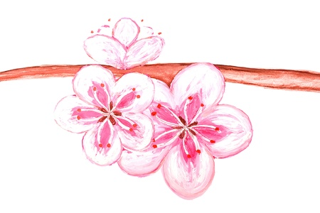 Blossom sakura drawing of the paint - isolated on white background photo