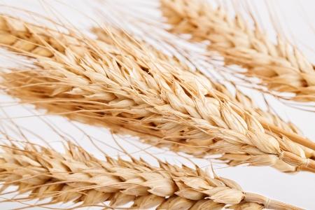 Wheat cones Stock Photo - 17313622