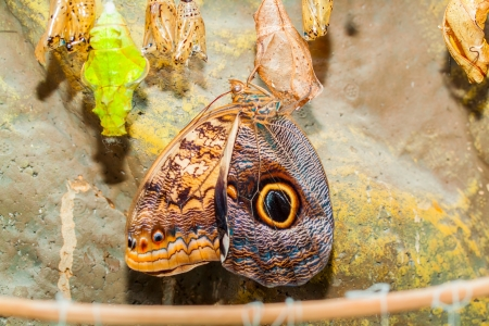 Big tropical butterfly Stock Photo - 17890137