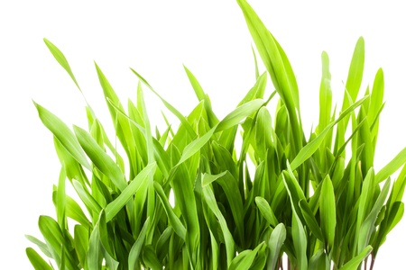 Fresh spring green grass isolated on white background Stock Photo - 18678557
