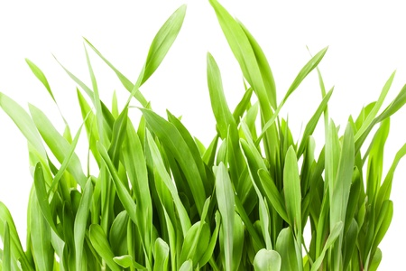 Fresh spring green grass isolated on white background Stock Photo - 18678558