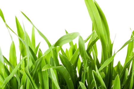 Fresh spring green grass isolated on white background Stock Photo - 18678555