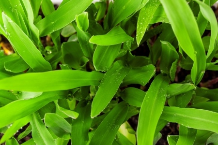 Fresh spring green grass Stock Photo - 18678563