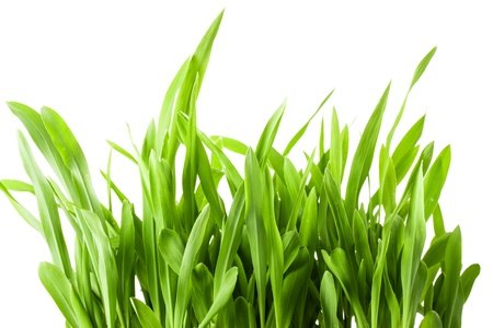 Fresh spring green grass isolated on white background Stock Photo - 18678540