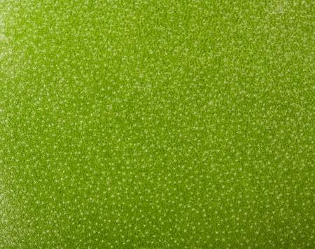 leaf texture Stock Photo - 18678577