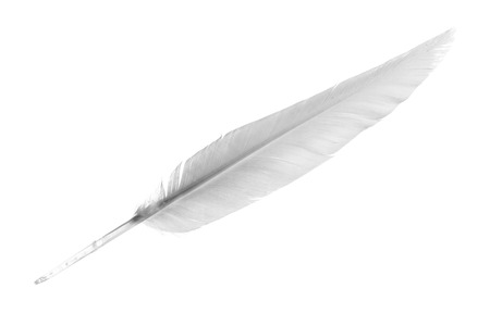 White Feather isolated on the white Reklamní fotografie