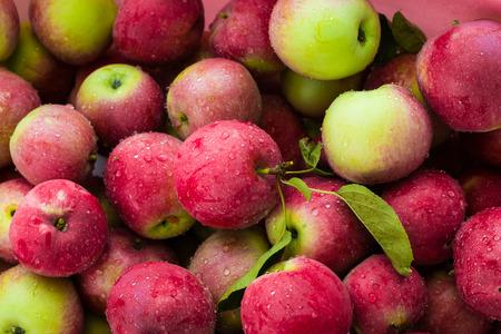 manzana roja: Las manzanas rojas de fondo