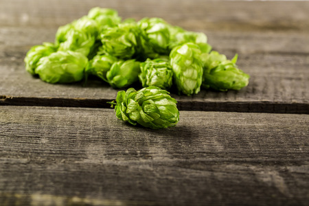 Fresh green hops on a wooden table photo
