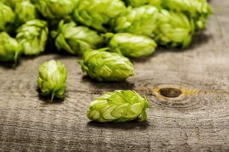 green beer: Fresh green hops on a wooden table Stock Photo
