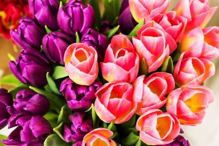 tulipan: Bukiet tulipanów wielokolorowe Zdjęcie Seryjne