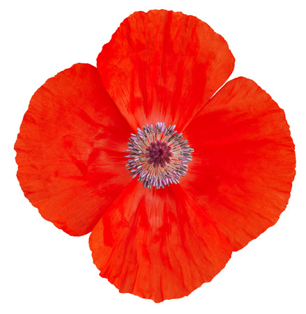 Poppy Flower. Remembrance Day Stock Photo