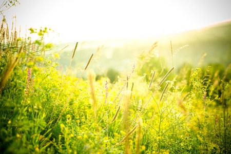 meadows: Beautiful rural landscape with sunrise over a meadow. Soft focus