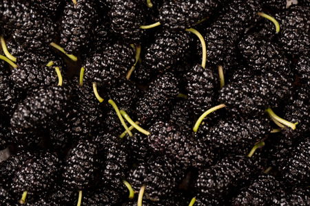 mulberry: Mulberry Background