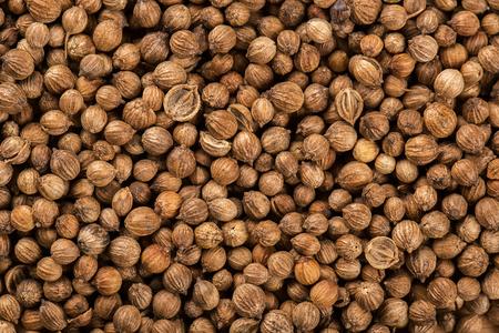 culantro: Antecedentes de semillas de cilantro secas