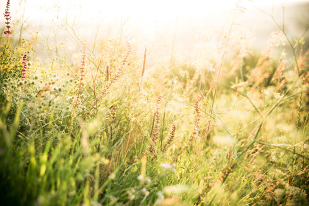 selective focus: Beautiful rural landscape with sunrise over a meadow. Soft focus