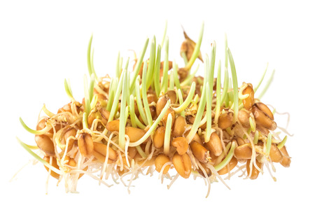 grain and cereal products: Handful of wheat germs isolated on the white background