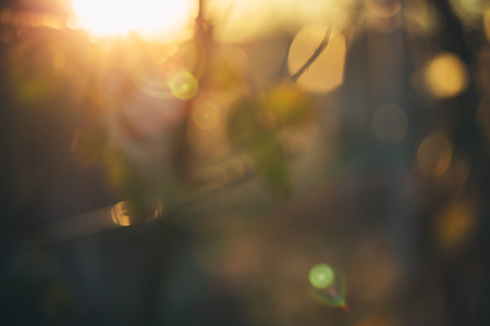 lensflare: Gold desert in sunset, abstract bright blur background for web design, brown colorful background, blurred. shallow DOF