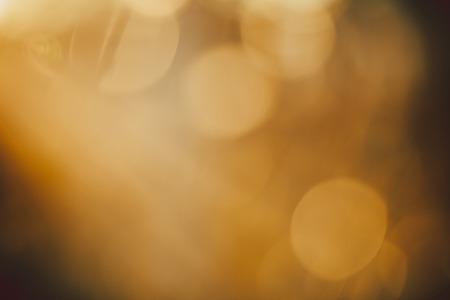 dof: Gold desert in sunset, abstract bright blur background for web design, brown colorful background, blurred. shallow DOF