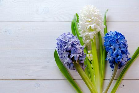 Frische Rosa, Blauen Und Weißen Blumen Hyazinthen Im Lichtstrahl Auf ...